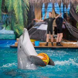 Дельфинарии, океанариумы Выползово
